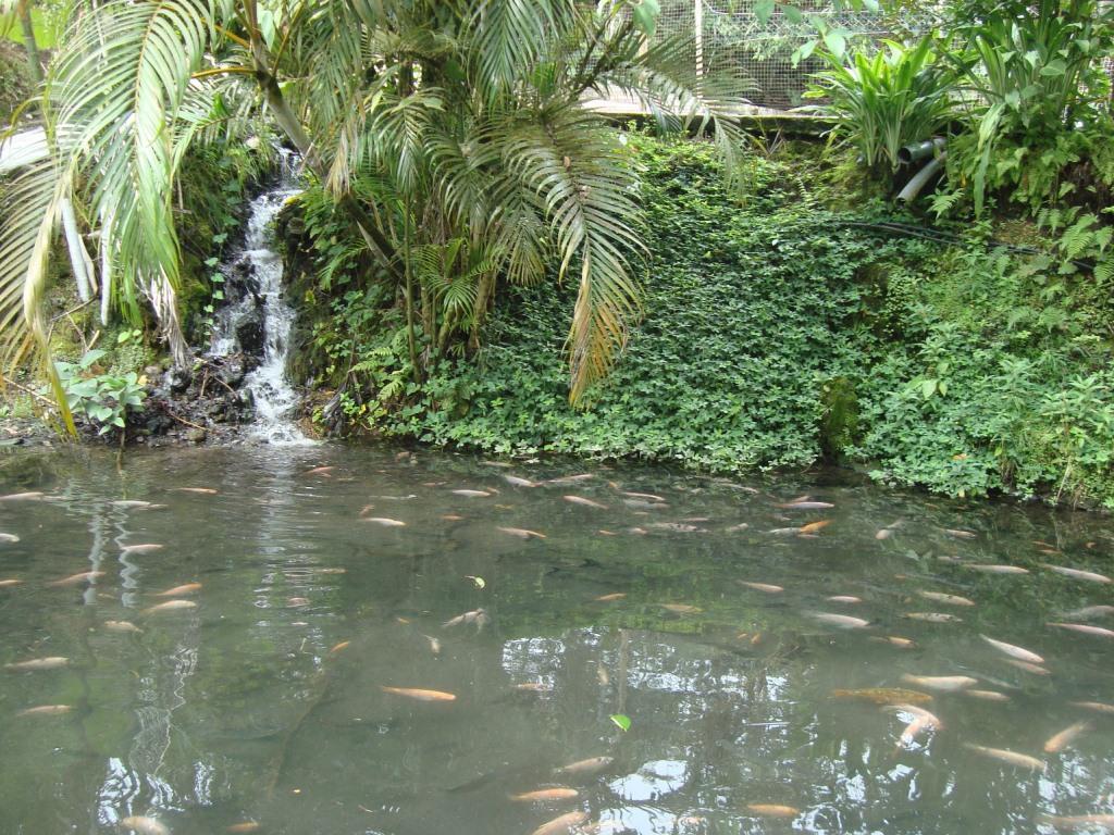 Criadero tilapia roja via lago agrio 2 acuariofilia for Impermeabilizacion de estanques para peces