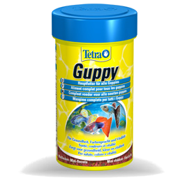 Tetra Guppy - Acuariofilia Ecuador